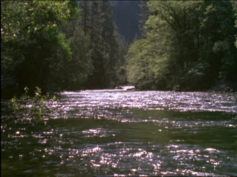river thru forest / yosemite national park, california - 2001 stock videos and b-roll footage