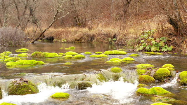 river - oirase river stock videos & royalty-free footage