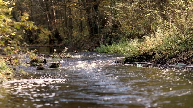 vidéos et rushes de rivière - mouillé