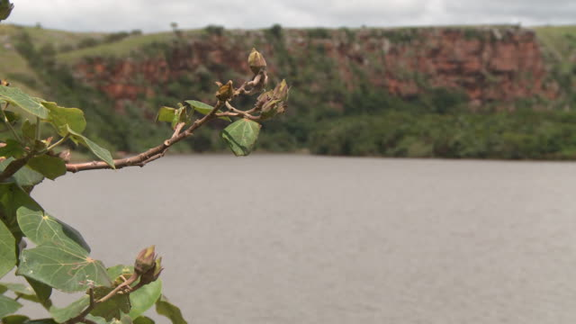 ms river w/ brown water gray clouds in sky twig w/ leaves fg green grassy hill rocky cliff bg - twig stock videos & royalty-free footage