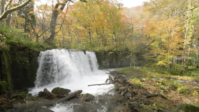river waterfall in autumn forest, japan - aomori prefecture stock videos & royalty-free footage