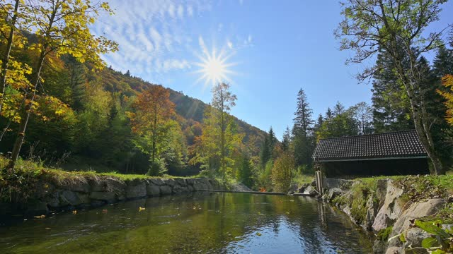 river wiese with sun in autumn, todtnau, schwarzwald, baden-württemberg, germany - wiese stock videos & royalty-free footage