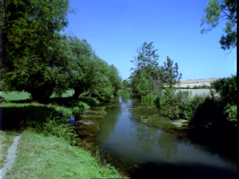 t/l river windrush, willows on bank, locked shot - windrush river stock videos and b-roll footage