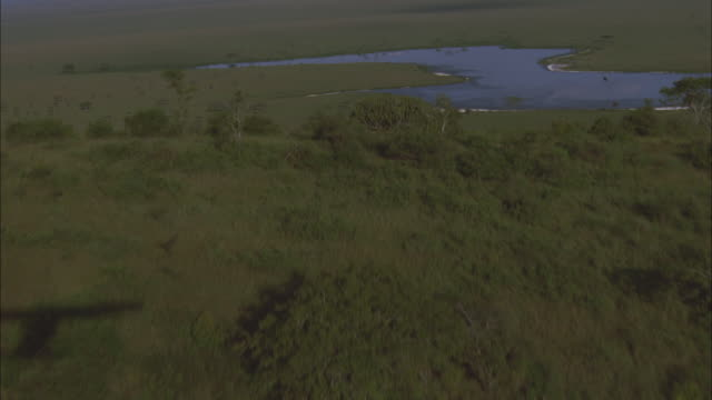 a river winds through serengeti national park. - national park stock videos & royalty-free footage