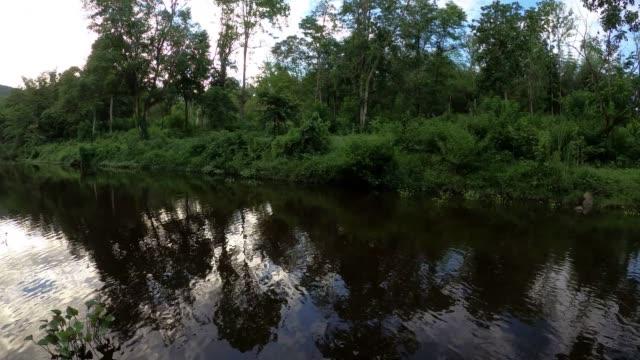 vídeos de stock e filmes b-roll de river with sky ant tree reflection - reflection