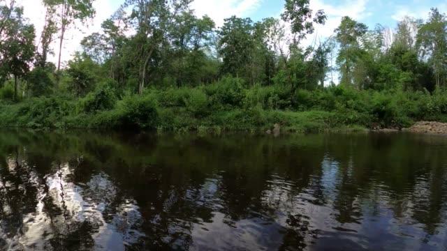 空アリの木の反射を持つ川 - リフレクション湖点の映像素材/bロール