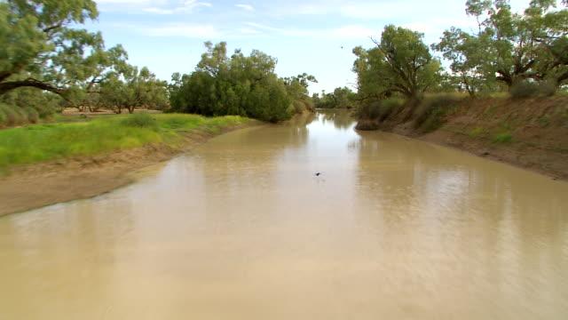 vídeos de stock, filmes e b-roll de ws aerial river with trees around / innamincka, south australia, australia - grupo pequeno de animais