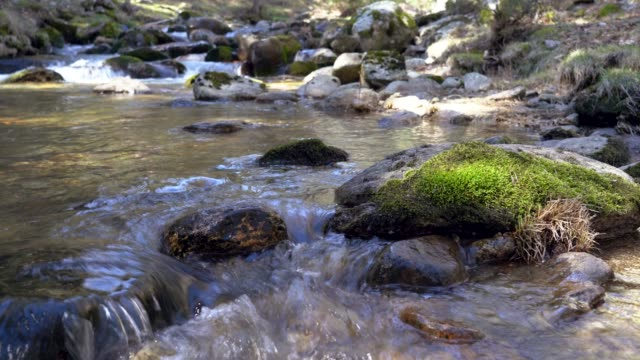 vídeos y material grabado en eventos de stock de riverbed running crystal clear water in forest - buena condición