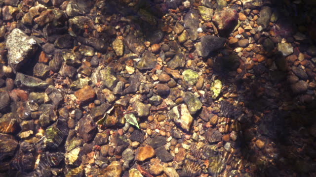 riverbed - pebble stock videos & royalty-free footage