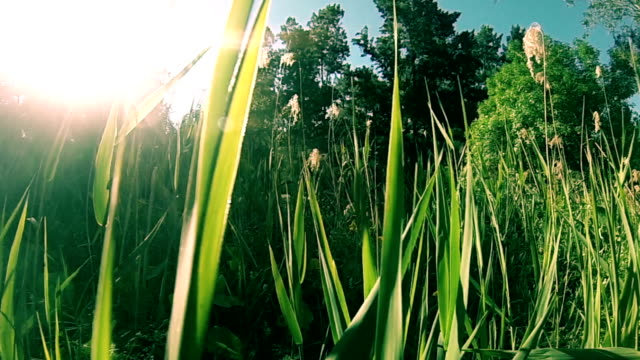 riverside vegetation at sunset - adelaide river stock videos & royalty-free footage