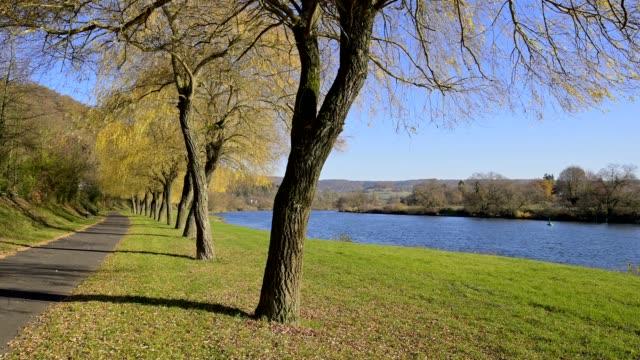 riverside with willow trees in the autumn, stadtprozelten, untermain, churfranken, spessart, bavaria, germany - riva del fiume video stock e b–roll