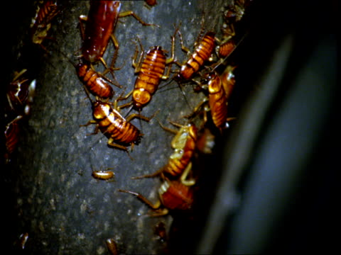 Roaches crawl over a tree trunk.