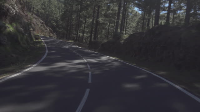 Road across forest and sunshine