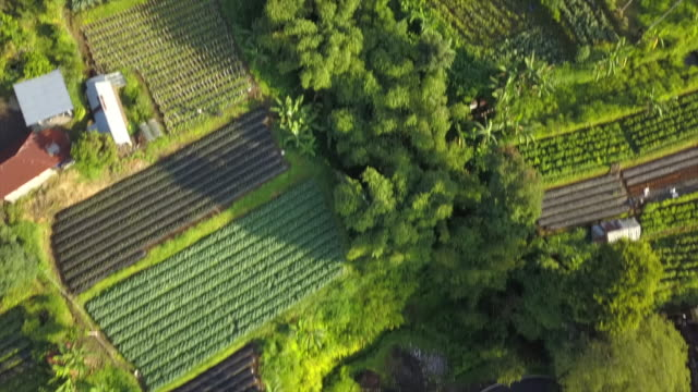 road along farmland / bali, indonesia - baumgruppe stock-videos und b-roll-filmmaterial