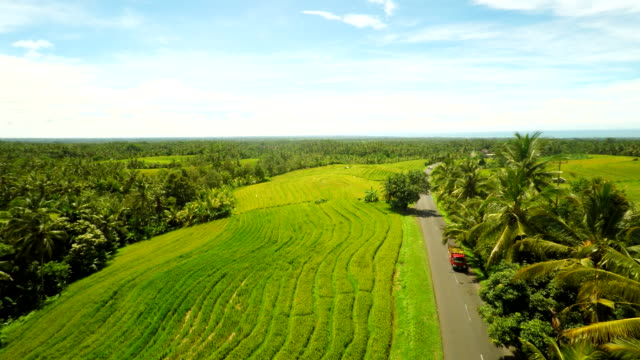 AERIAL Road Along The Rice Fields And Palm Trees