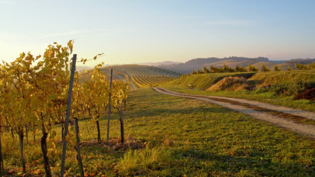DS Road along vineyards in the fall season