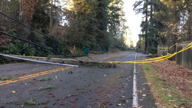 vidéos et rushes de road closure due to the wind storm the storm knocked down several trees on power lines pud customers will be out of power for the next couple of days... - câble électrique