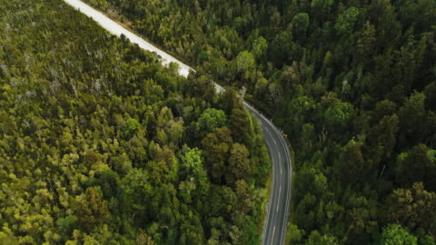 road cutting through forest. - forestry industry stock videos & royalty-free footage