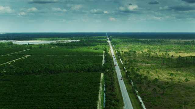 road dividing fred c. babcock/cecil m. webb wildlife management area and orange groves in florida - grove stock videos & royalty-free footage