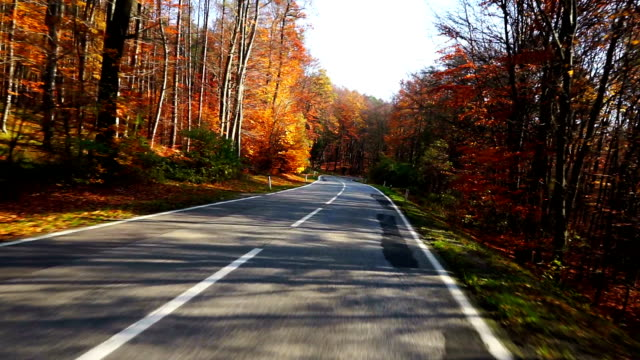Road driving in autumn forest