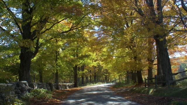 vídeos y material grabado en eventos de stock de road flanked by trees - comodidad