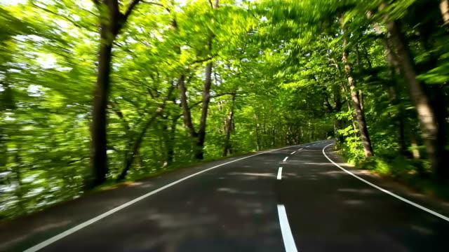 vidéos et rushes de route dans la forêt verte - printemps