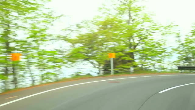 road in a green forest - plusphoto stock videos & royalty-free footage