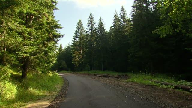 vídeos y material grabado en eventos de stock de road in forest - árbol de hoja caduca
