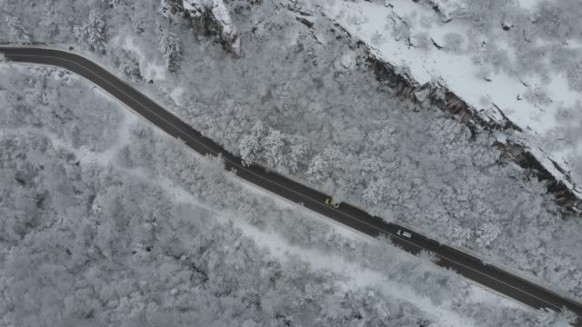 Road in snow forest