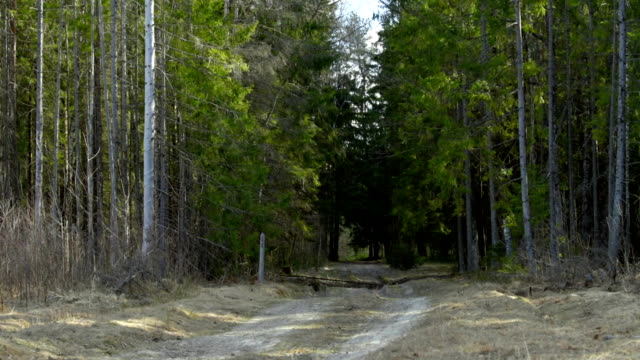 road in sunny forest - coniferous stock videos & royalty-free footage