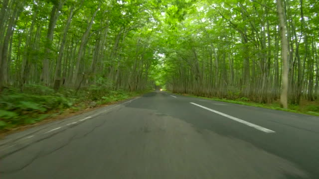 road in the forest trough fog - moving down stock videos & royalty-free footage