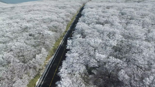 road in the middle of forest on hallasan (highest mountain in south korea) in jeju island in winter - naturwunder stock-videos und b-roll-filmmaterial
