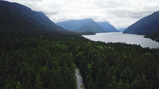 strada nel mezzo della foresta in nord america - pino video stock e b–roll