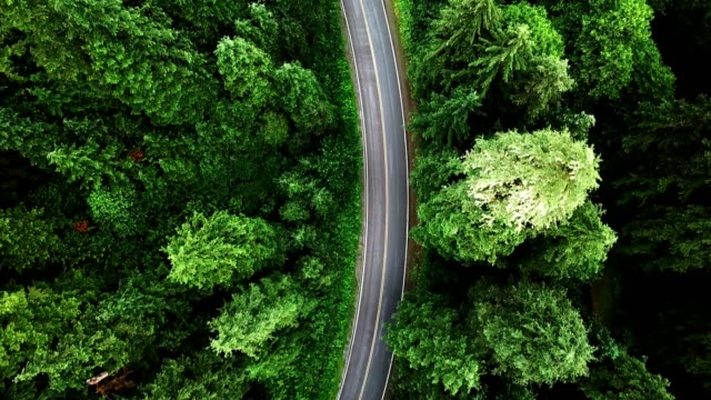 road in the middle of the forest in north america - curve stock videos & royalty-free footage