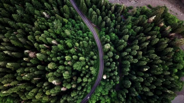 road in the middle of the forest in north america - zona pedonale strada transitabile video stock e b–roll