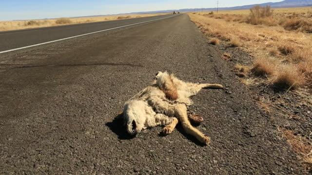 road kill - run over stock videos & royalty-free footage
