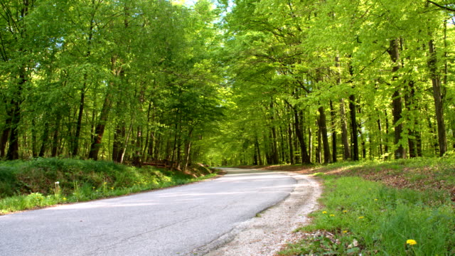 HD DOLLY: Road Leading Through The Forest