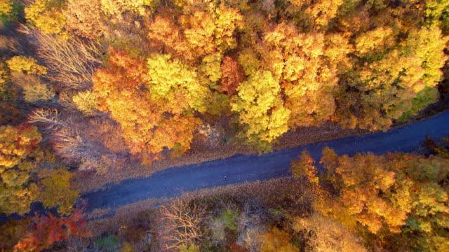 WS AERIAL POV Road passing through autumn trees