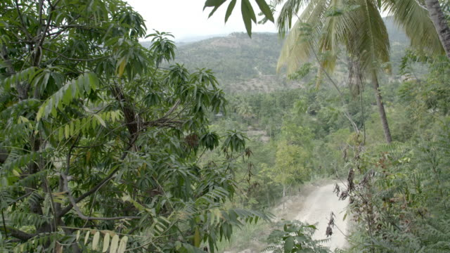Road passing through jungle