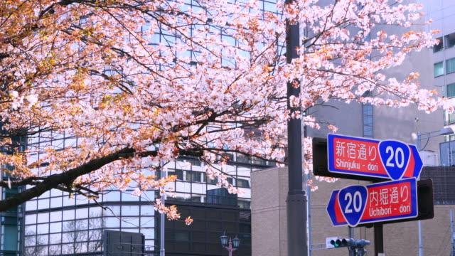 Road sign under the Cherry blossoms tree. Road sign indicates direction of Shinjuku-dori and Uchibori-dori.