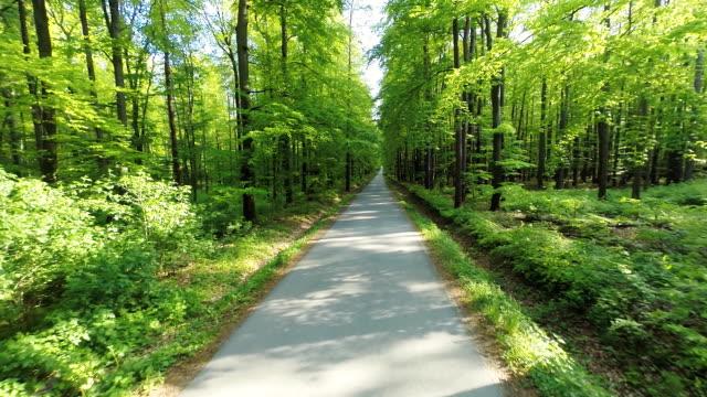 HD HELI: Road Through A Green Forest