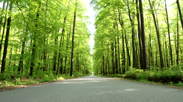 HD CRANE: Road Through A Green Forest