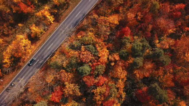 road through autumn forest from above, germany - turingia video stock e b–roll
