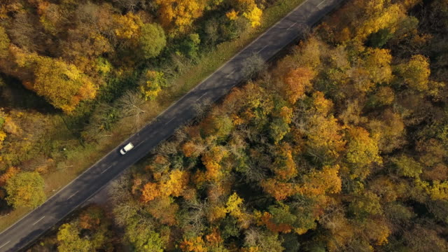 road through autumn forest from above, germany - weimar video stock e b–roll