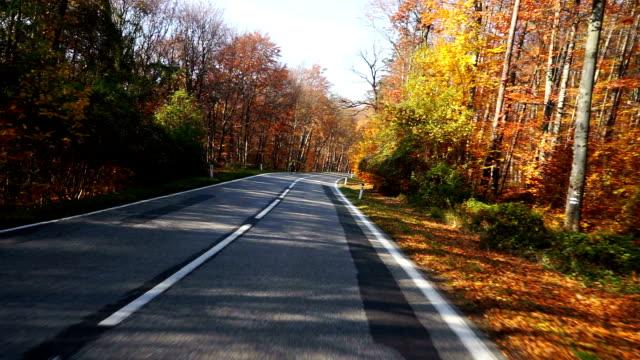 vídeos de stock, filmes e b-roll de estrada através da floresta de outono - área arborizada