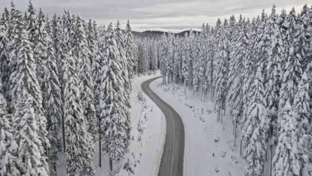 aerial road through forest in winter time - dramatic landscape stock videos and b-roll footage