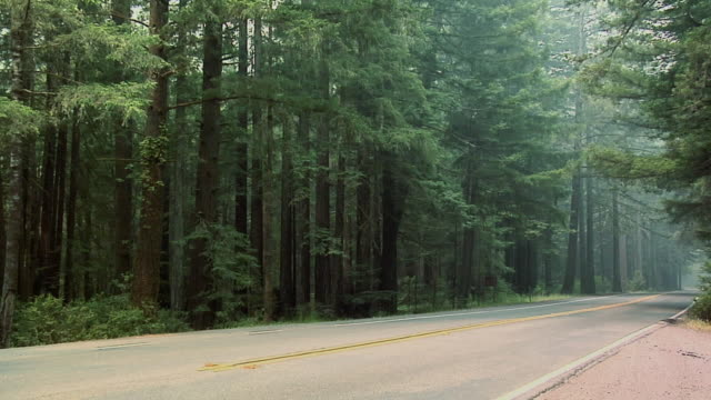 ms, road through forest, olympic national park, washington, usa - stationary process plate stock videos & royalty-free footage