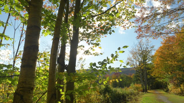 road through forest on a sunny autumn day in vermont - vermont stock videos & royalty-free footage