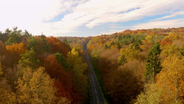 AERIAL Road through forest on a sunny day in fall