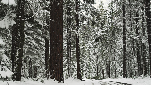 WS PAN Road through snow covered Forest near Lassen Volcanic National Park near Red Bluff / Red Bluff, California, USA